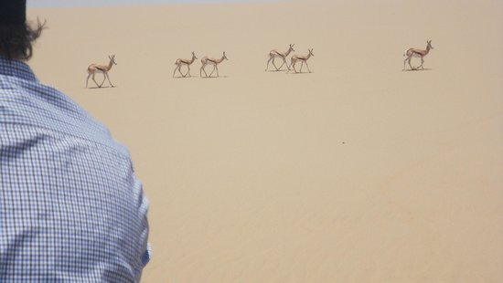 Kuiseb Delta Adventures: Springbok in the desert