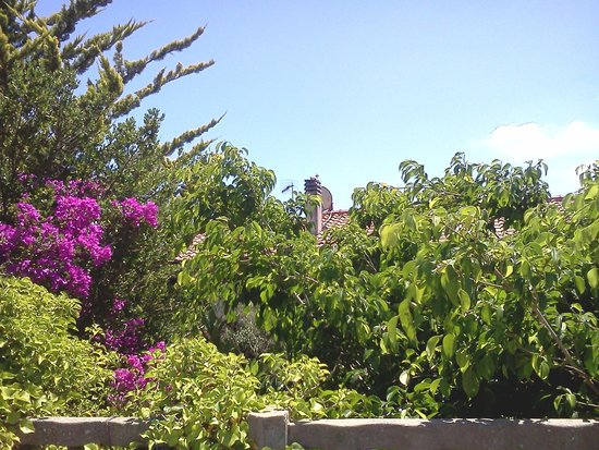 Hotel Marelba: Vegetazione Elbana