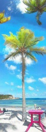 Palm Trees near Watergate Villas