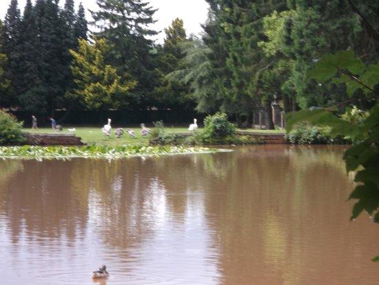 Tredegar House: swans