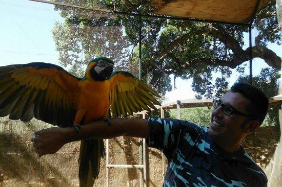 Zoo Castellar: Papagayos preciosos