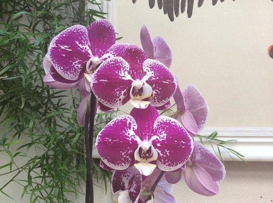 Aparthotel City 5: Le Orchidee di Kristina