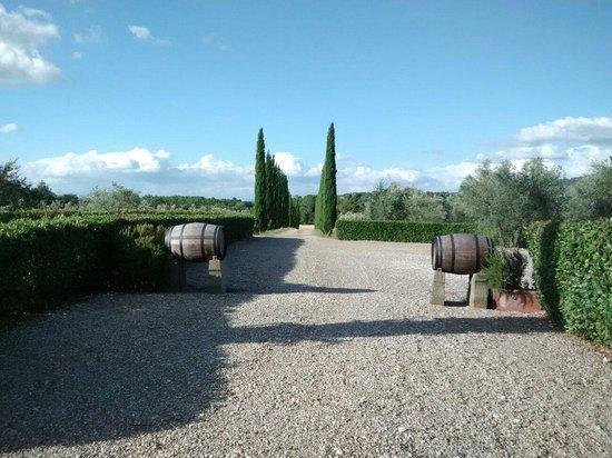 Villa Sant'Andrea: Viale per la location della piscina