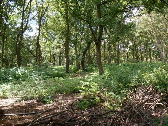 Sherwood Forest: sherwood5