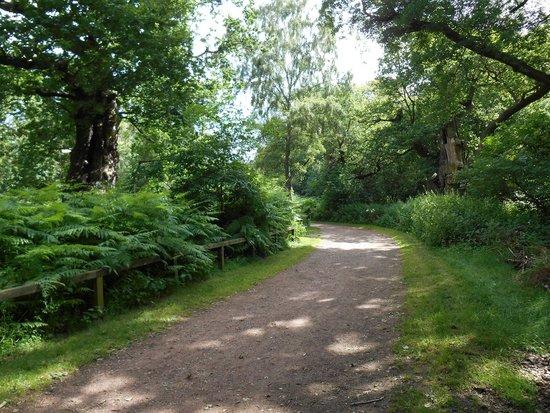 Sherwood Forest: sherwood4