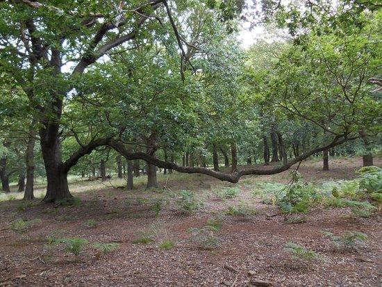 Sherwood Forest: sherwood8