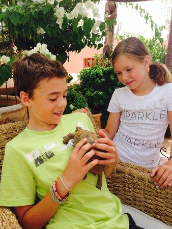 Riad Dar Anika : Tortoises