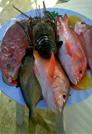 Nivel Mar Beach Club & Restaurant: Catch of the day.