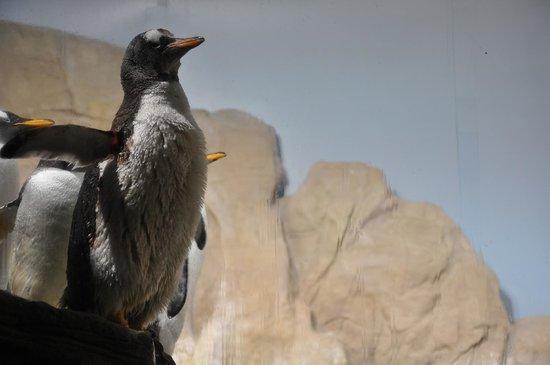 Acquario di Genova: пингвин