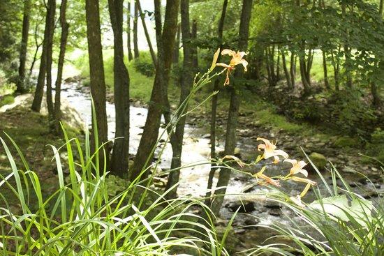 Valle Crucis Farm : Stream nearby