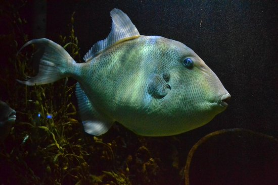 The Scottish SEA LIFE Sanctuary: Another of the many fish