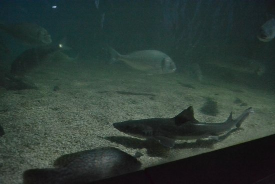 The Scottish SEA LIFE Sanctuary: One of the many fish