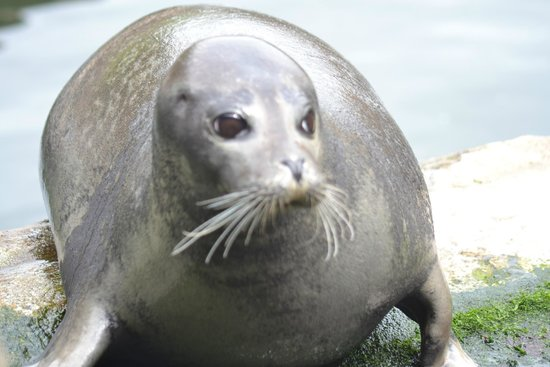 The Scottish SEA LIFE Sanctuary: Seal