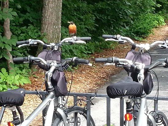 The Landing Resort: Bike Rentals