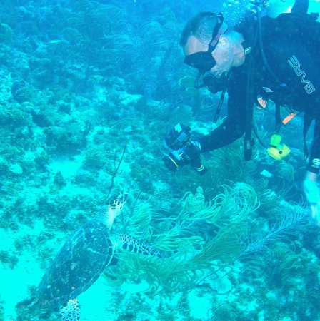 Bonaire East Coast Diving: Curious turtle swims up to photographer