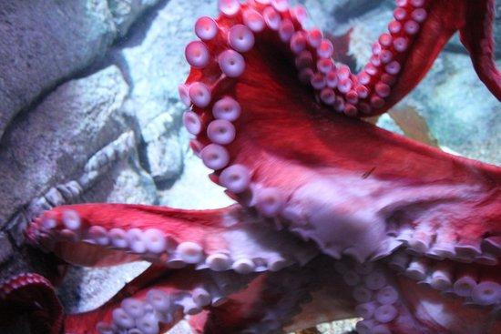 Monterey Bay Aquarium : Aquarium