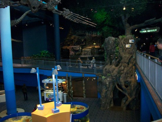 Scuba Diver Picture Of Ripley 39 S Aquarium Of The Smokies