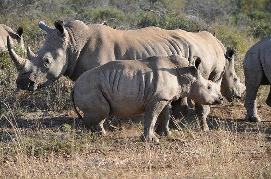 Jaci's Safari Lodge: Nashörner
