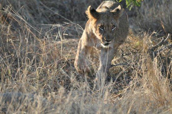 Jaci's Safari Lodge : Streichelkatze