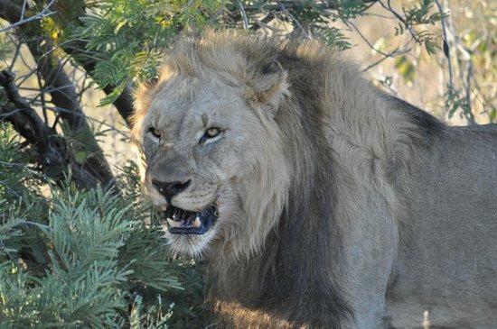 Jaci's Safari Lodge: Papa mit vollem Magen nach dem Essen