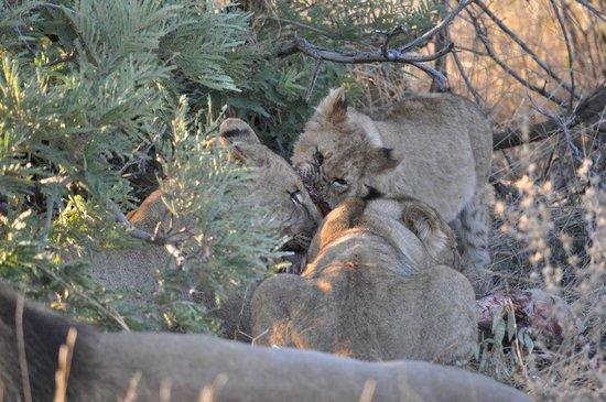 Jaci's Safari Lodge: Mama mit Kindern zu Tisch