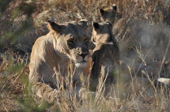 Jaci's Safari Lodge: Mama mit Kindern