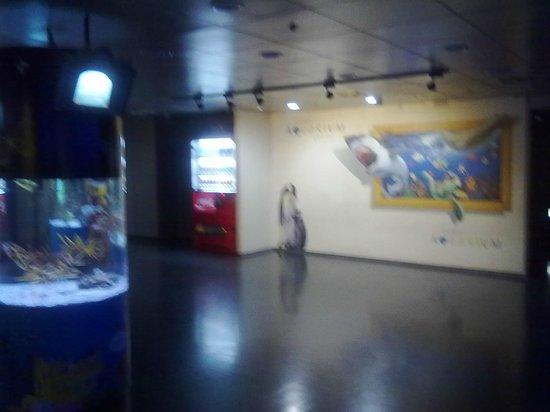 Coex Aquarium: Вход в Аквариум