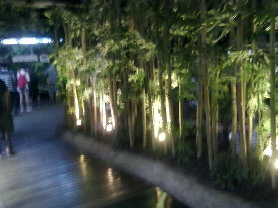 Coex Aquarium: Живой бамбук