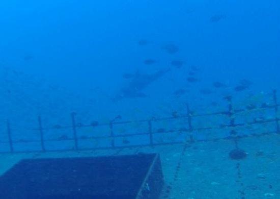Kaimana Divers: Dolphin!