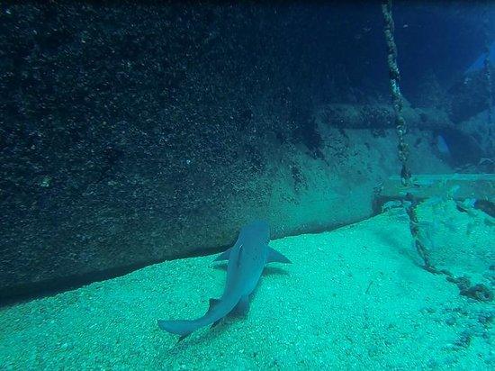 Kaimana Divers: Shark!