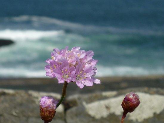 Falls Hotel & Spa: Coastal Flora