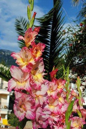 Milkyway Apart & Hotels: Beautiful well kept gardens