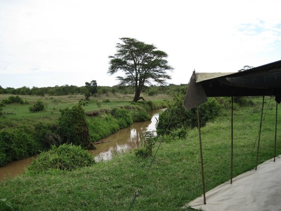 Ol Pejeta Bush Camp, Asilia Africa : Dining Tent