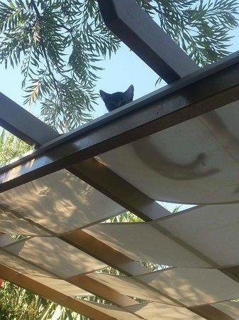 Aegean Gate Hotel: Cute kittens