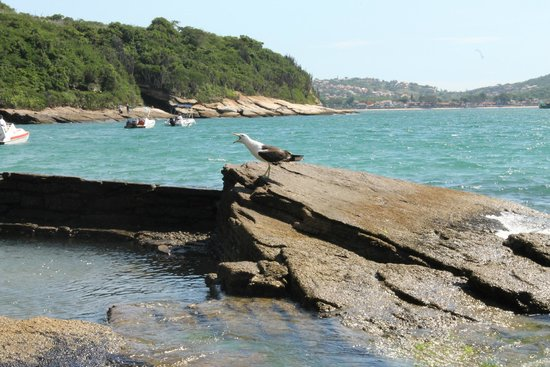 Azedinha Beach : vista