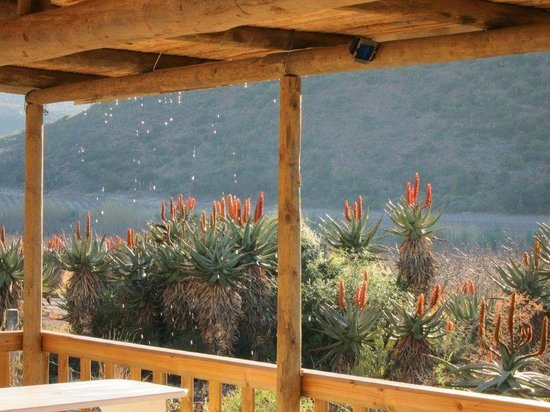 Koedoeskloof Country Lodge : Melting ice dripping from restuarant roof onto the aloes