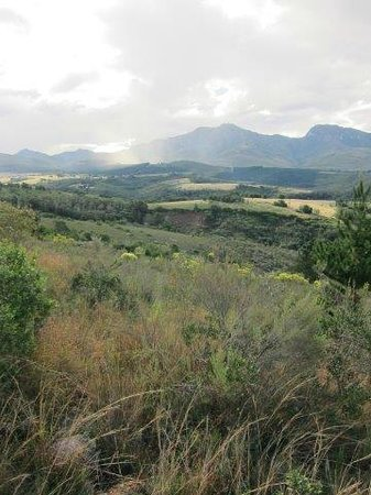Outeniqua Moon Percheron Stud and Guest Farm: View from the farm