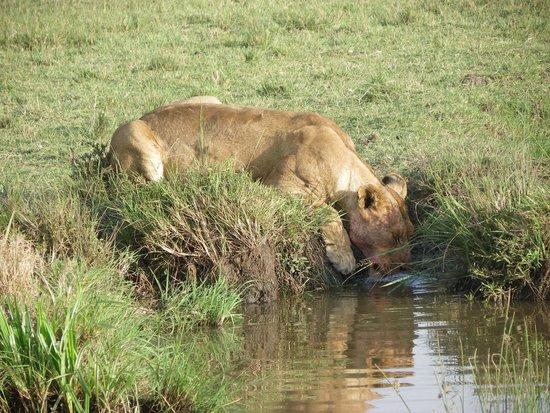 Mara Ngenche Safari Camp: Nice drink after dinner