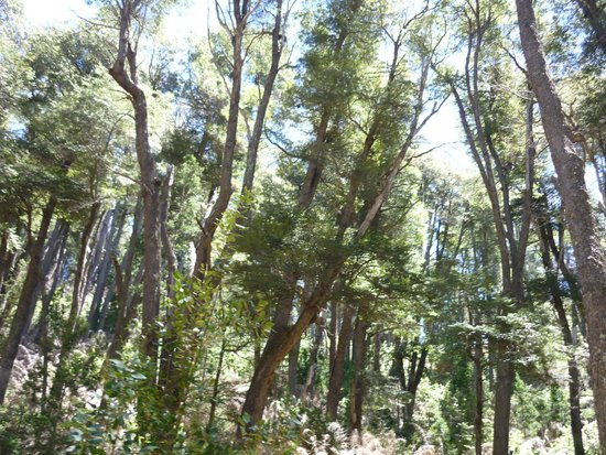 Cascada de los Duendes: Bosque camino a la cascada