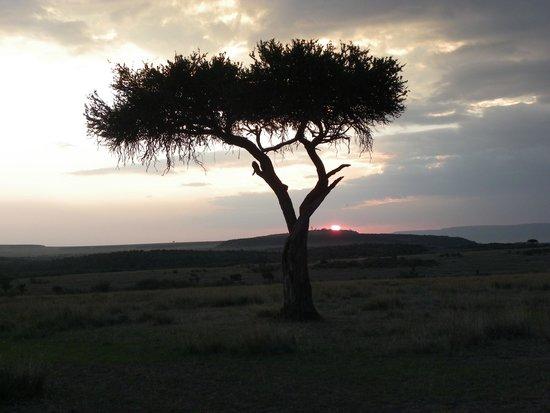 Mara Ngenche Safari Camp: Evening drink