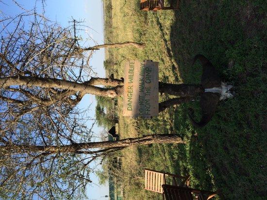 Serengeti Wildcamp: Wildcamp