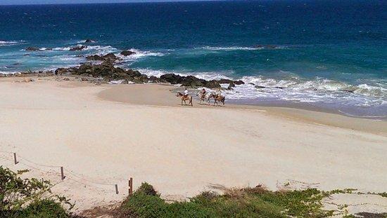 Hilton Los Cabos Beach & Golf Resort : Horseback riders on beach