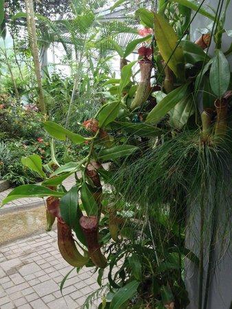 Kobe Nunobiki Herb Garden: inside the conservatory house
