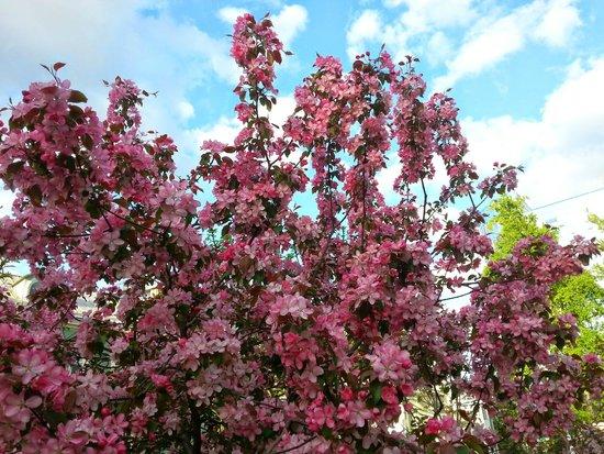 Courtyard Moscow Paveletskaya: During spring