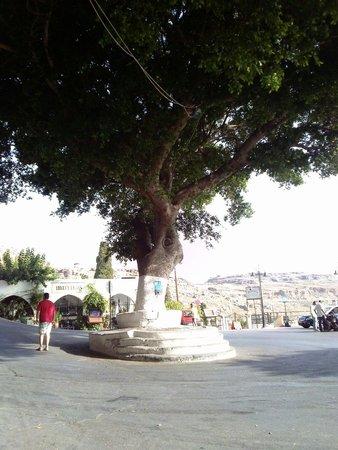 Lindos: Albero