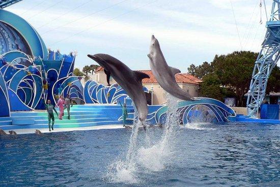 SeaWorld San Diego : Saw this dolphin show twice because it's so fun!