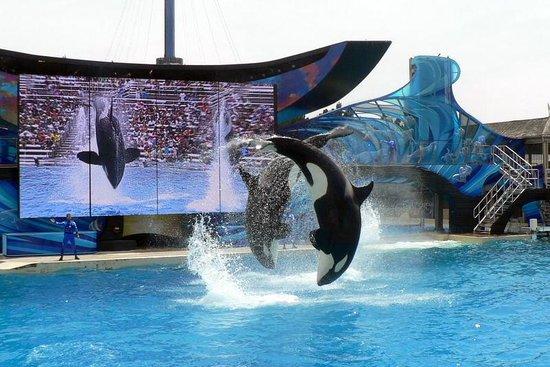 SeaWorld San Diego : Shamu doesn't disappoint.