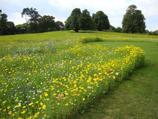 Coworth Park - Dorchester Collection: Beautiful meadows and wild flowers