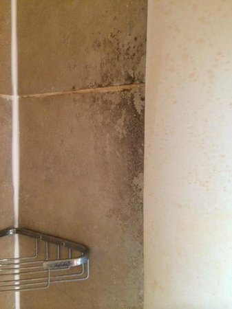 The Tophams Hotel Belgravia : In shower mould/mildew