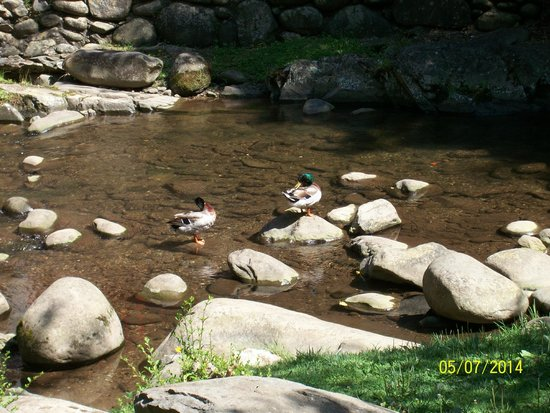Zoders Inn & Suites: More Duck pictures